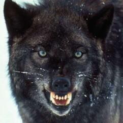 Profile picture of Convel